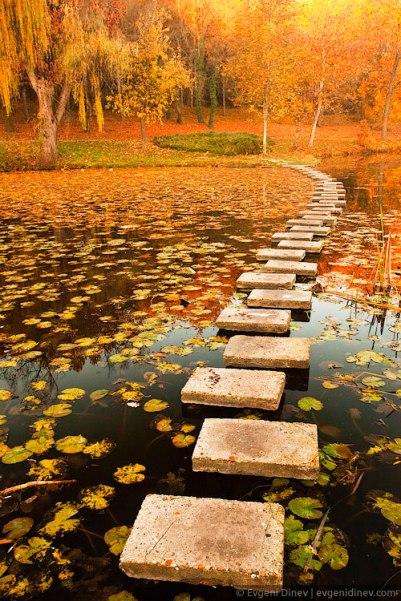 pond-steps
